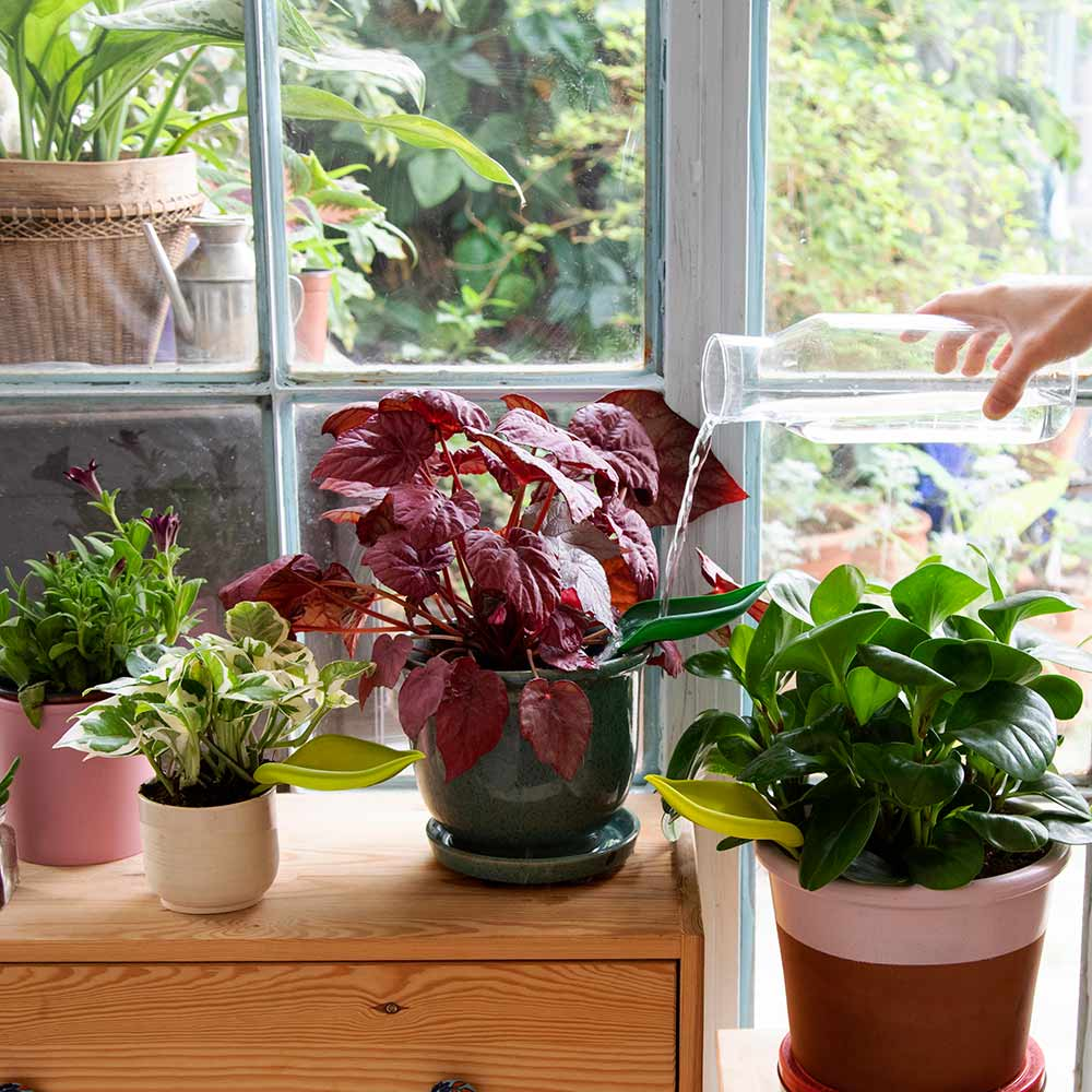 Unique Indoor Gardening Accessories You Must Have